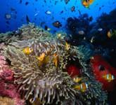 Tra i pesci e i coralli di Tiran