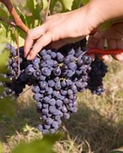 Perugia capitale del vino