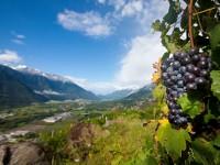 In Valtellina sulle strade del vino