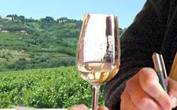 """Appuntamento in Friuli con """"Vino & territorio 2005"""""""