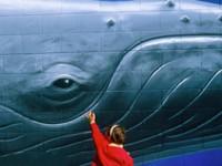 """Basta caccia delle balene. È l'ora del """"whale watching"""""""