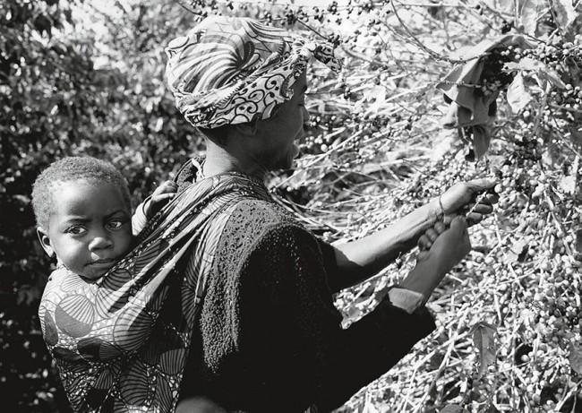 Munali Coffee Farm, Zambia, 2014  - silver gelatin print - Paolo Solari Bozzi©