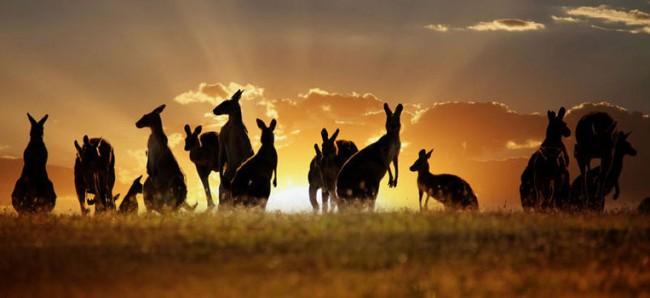 L' Australia e la nuova Guinea