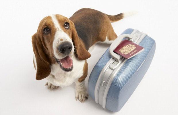 I consigli per chi vola con il proprio animale domestico