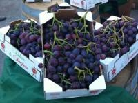 A Guagnano si festeggia l' uva cardinal e il vino