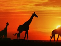 Mondo Natura: 10 panorami indimenticabili