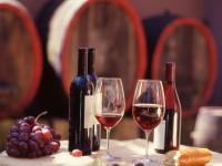 Camerano, Festival del Rosso Conero