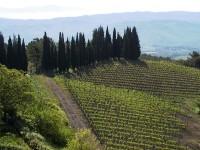 Ciclowine: bike tour alla scoperta del Chianti