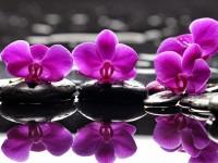 L'Amore ai tempi delle orchidee