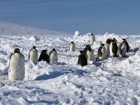 Antartide in festa con la settimana dei radioamatori