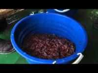 #RottAntartide2106: Alla ricerca del Krill (#16)