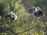 Il Parco del Delta del Po con la meravigliosa avifauna