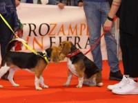 Padova pet friendly con Quattrozampeinfiera