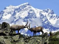 Safari tra i monti del Parco del Gran Paradiso