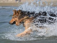 Baubeach, la spiaggia dove i cani sono i padroni