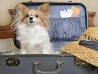 Turismo, premiate le strutture animal-friendly