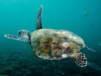 Costa Crociere approda sulla Sir Bani Yas Island