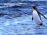 Antartico © Marco Santini