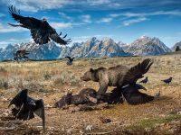 Wildlife Photographer  of the year, ®Charlie Hamilton James, Mammals Finalist