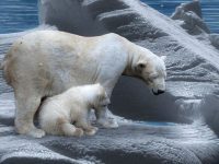 Il drone utilizzato per salvare gli orsi polari