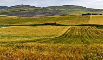 Daunia Ascoli-Satriano-campo-di-grano