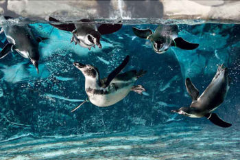 Gabicce Cattolica-acquario-pinguini