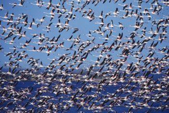 Birdwatching Foto Marino-Gasperoni