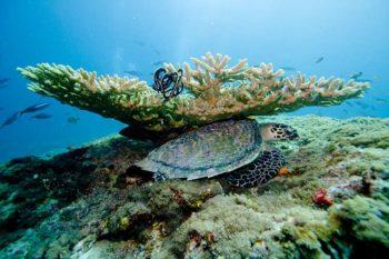 Immersioni Maldive-3