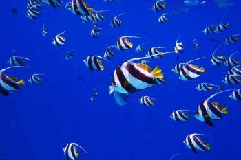 Immersioni Maldive-5