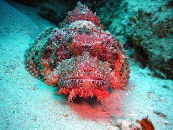 Immersioni Mar-Rosso-2