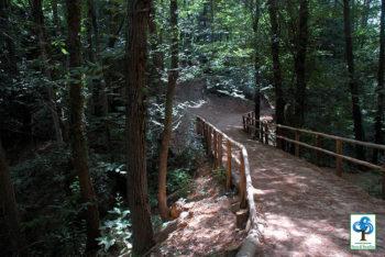 Promontorio di Portofino sentieri-interno-del-parco