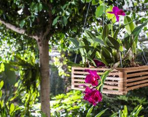 Orchideenwelt, il mondo delle orchidee si trova in Alto Adige