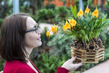 Orchideenwelt un mondo di orchidee