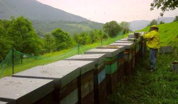 Oglio Apicoltura-Mombelli-arnie