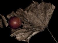 Effimero – Persistente: foglie, punte e altro