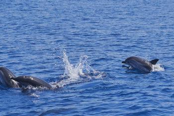 Ginosa Marina lo-spettacolo-dei-delfini