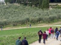 Camminata tra gli olivi in tutta Italia
