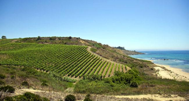 Sicilia, vigneti Mandrarossa dalle colline degradano verso il mare