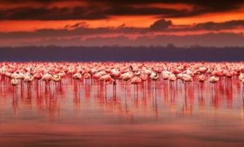 Meraviglie-del Kenya fenicotteri Lago-Nakuru