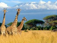 Le meraviglie del Kenya tra spiagge e safari