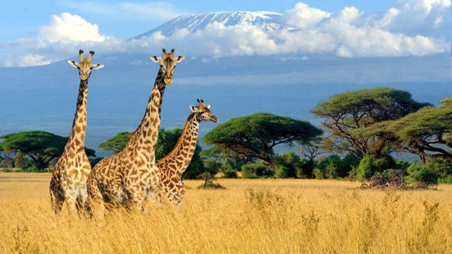 Risultati immagini per KENYA