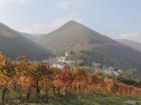 Serrapetrona e il vitigno Vernaccia Nera