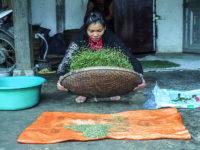 La pulizia del riso (Ph: Donatella Penati M.© Mondointasca.it)