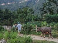 Il pascolo del bestiame in montagna (Ph: Donatella Penati M.© Mondointasca.it)