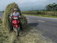 Raccolta e trasporto del fieno (Ph: Donatella Penati M.© Mondointasca.it)