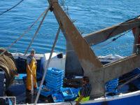 Palamós, pescatori al porto museo col pescato (foto: P. Ricciardi © Mondointasca.it)