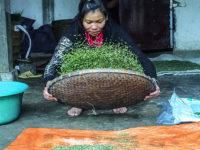 La pulizia del riso(Ph: Donatella Penati M.© Mondointasca.it)
