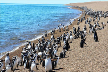 Geografia Penisola valdes pinguini