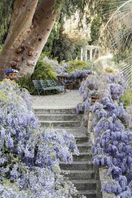 Fiori e colori Giardini_glicini1_ph-Matteo-Carassale_Archivio-Villa-della-Pergola