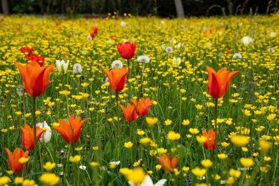 Fiori e colori Giardinity-Primavera-2019
